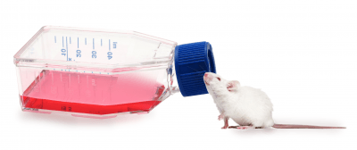 Mouse tissue samples are one example of extraction targets for MicroGEM's prepGEM Universal Kit